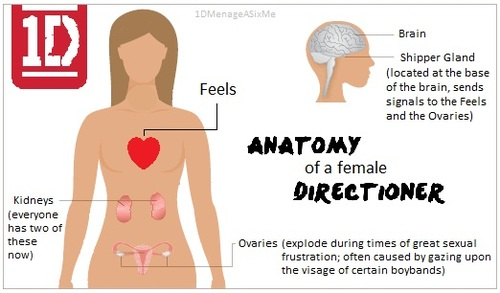 The anatomy of a